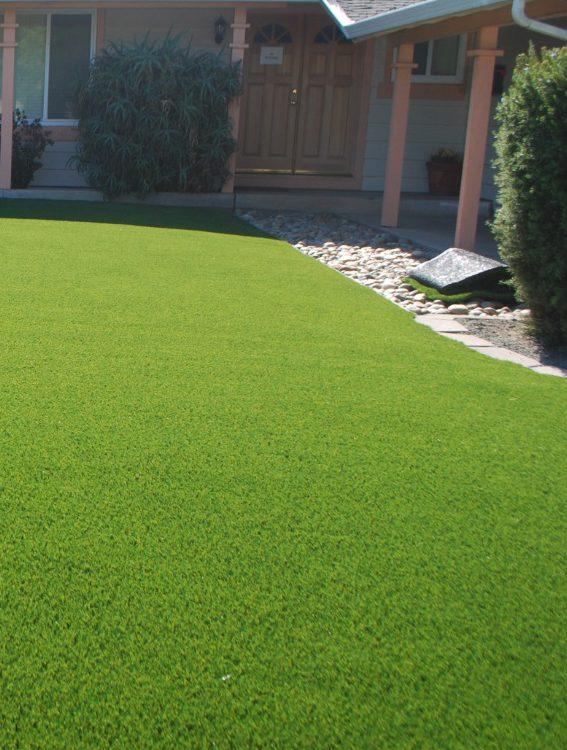 Когда сажают газонная трава лилипут 885
